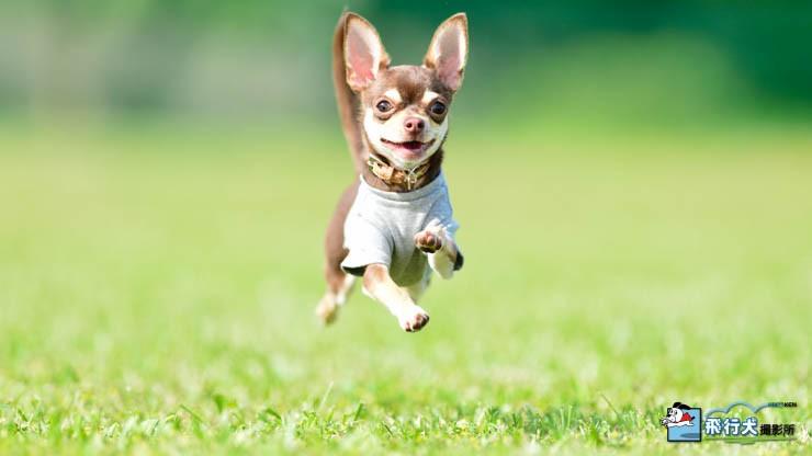 飛行犬撮影会の魅力