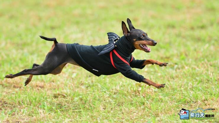 飛行犬とは