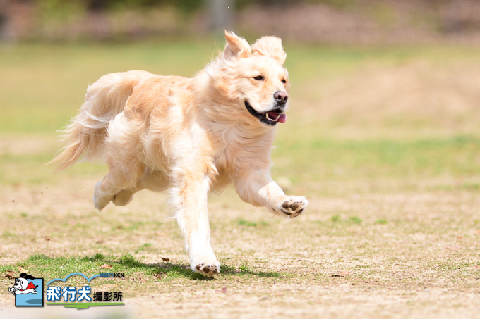 犬の森POMの飛行犬撮影会