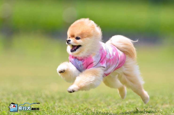 陽だまりドッグラン飛行犬撮影会