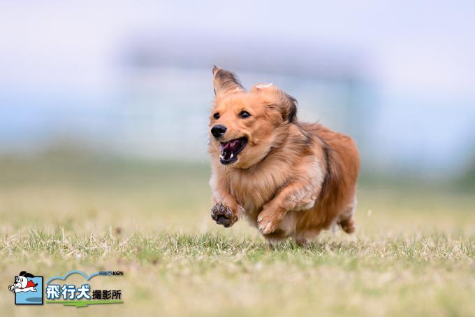 箱根十国峠 飛行犬撮影会