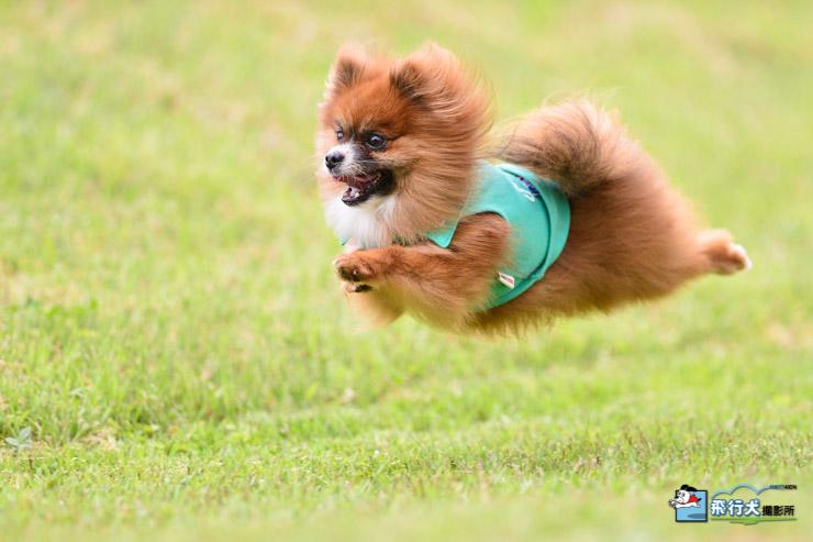 八ヶ岳自然文化園飛行犬撮影会