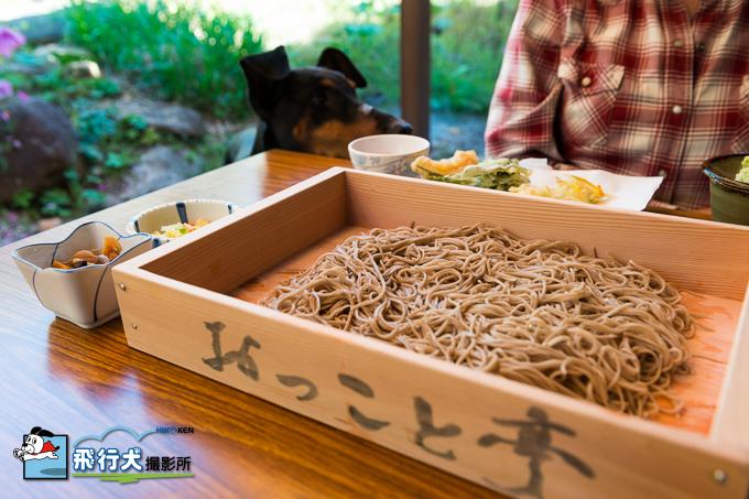 八ヶ岳自然文化園、犬とお楽しみガイド