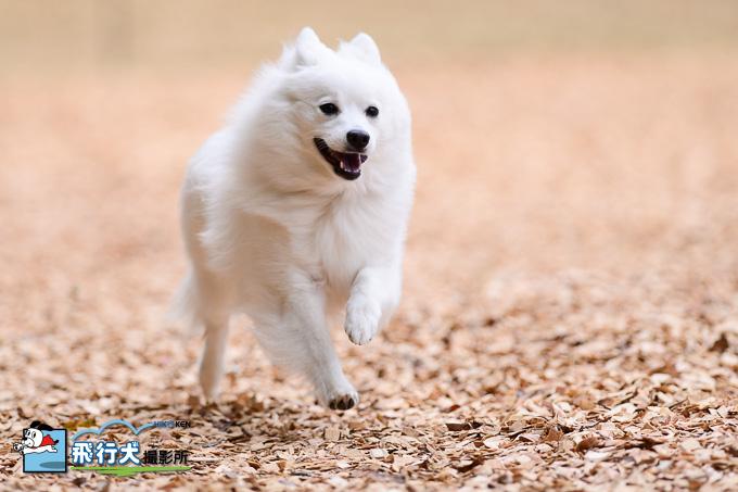 愛犬の駅 飛行犬撮影会