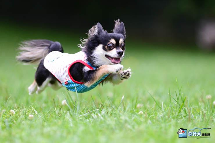 ドッグリゾートwoof飛行犬撮影会