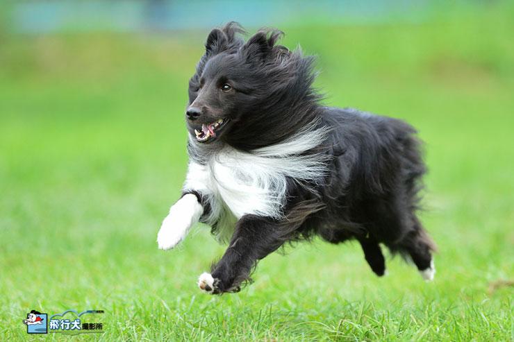 滝沢牧場飛行犬撮影会