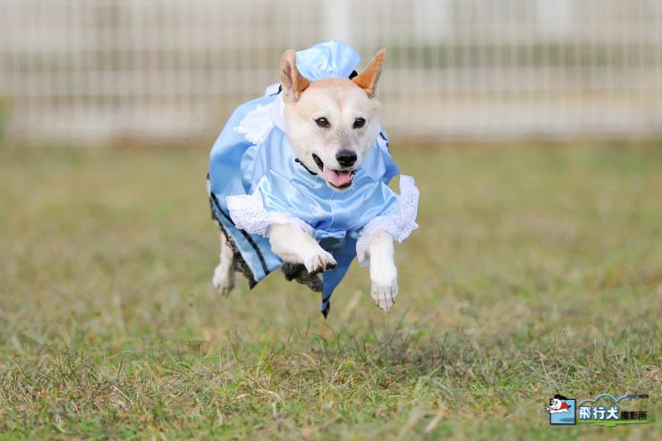 コスプレ飛行犬