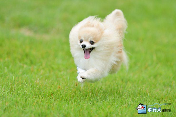 アウトドアドッグフェスタin八ヶ岳 飛行犬撮影会に来てくれたワンちゃん その1