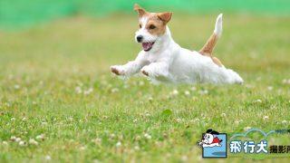 静岡県内の飛行犬撮影会のご案内