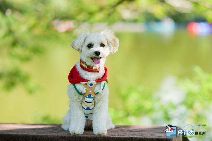 アウトドアドッグフェスタin八ヶ岳 飛行犬撮影会に来てくれたワンちゃん その2