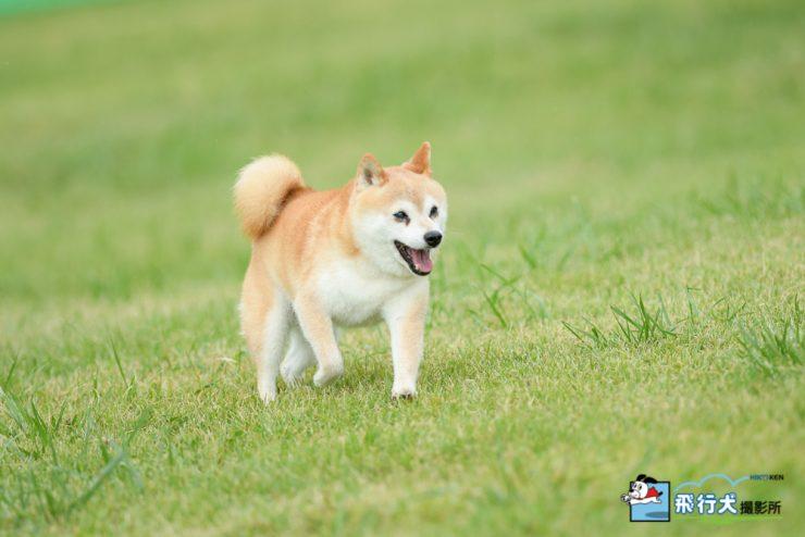 アウトドアドッグフェスタin八ヶ岳 飛行犬撮影会